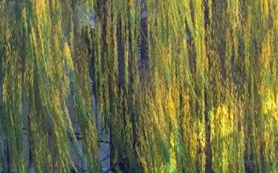 Willow Speaking